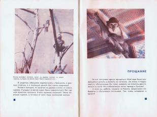 """Г. Снегирев, С. Гуревич """"В гостях у обезьян"""", М: Малыш,-37 с., 1966"""